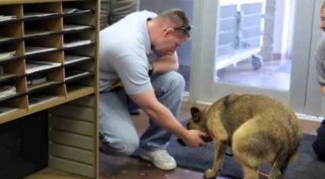 7 Lucky Dogs Who Made it Home Thanks to Their Microchip