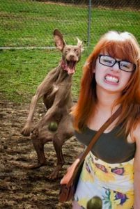 42 Most Epic Dog Photobombs On Pinterest