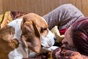 Canine Comfort: How Your Dog Reads Your Emotions