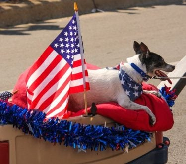 July 4th Safety Tips For Your Pet