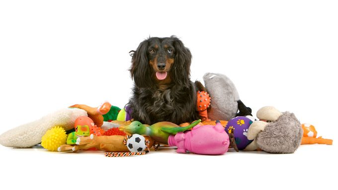 dog lying down with toys