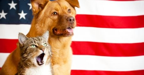 Adopt a dog or cat for the 4th of July