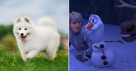 8 Dog Breeds That Perfectly Represent Disney Characters