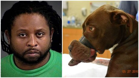 William Leonard Dodson Arrested For Taping Dog's Mouth Shut