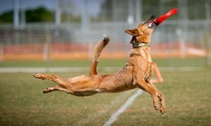 6 Dogs Who Are Way Better At Sports Than Most Humans