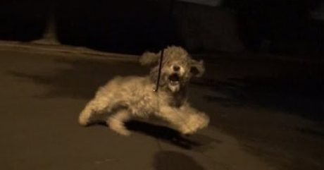 Saving Oakley: A Late Night Dog Rescue Mission