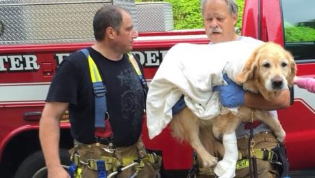 After Diving In Front Of Bus To Save Owner, Hero Service Dog On The Mend
