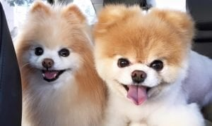 Smile Power Day: Dogs Whose Smiles Will Make You Smile