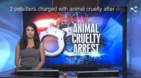 Pet Sitters Charged With Animal Cruelty When Owners Return To Dead Dog