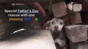 Amazing Doggie Daddy Father's Day Rescue [VIDEO]