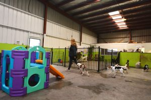 So You've Been Kicked Out Of Doggie Day Care: What Next?
