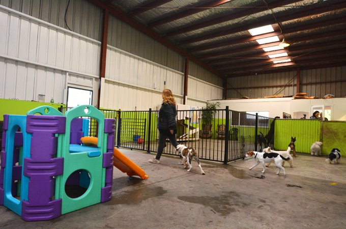 So you 39 ve been kicked out of doggie day care what next for Boarding facility for dogs