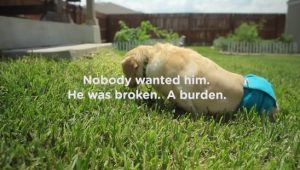 When A Paralyzed Man Adopts A Paralyzed Dog Nothing Can Stop Them