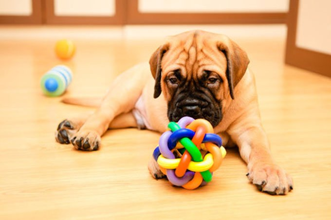 Puppy needs a safe place to play. (Photo Credit: Shutterstock) Set up a puppy playroom: 0-6 months and up