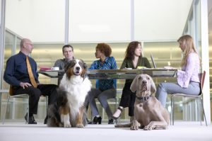 Do's And Dont's Of Take Your Dog To Work Day