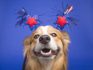 Why You Should Make Sure Your Dog Has Tags This 4th Of July