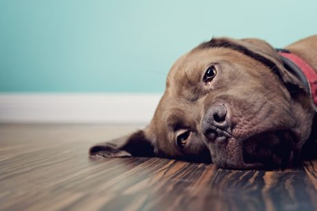 Top 10 Constipation Remedies For Dogs & Puppies