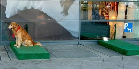 IKEA Creates Dog Parking Station So Dogs Don't Have To Sit In Hot Cars