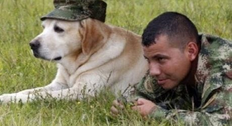 Support Working Military Dogs By Sending K9 Care Packages