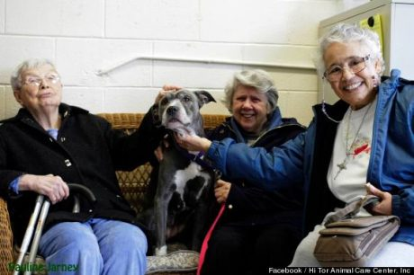Nuns In New York Adopt A Senior Pit Bull That Nobody Wanted