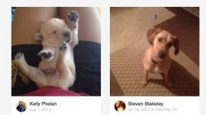 5 Adorable Doggie Vine Videos To Make You Smile