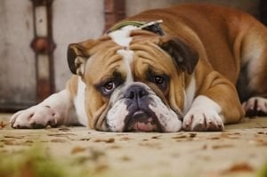 How To Tell If Your Dog Is In Pain And What To Do To Help