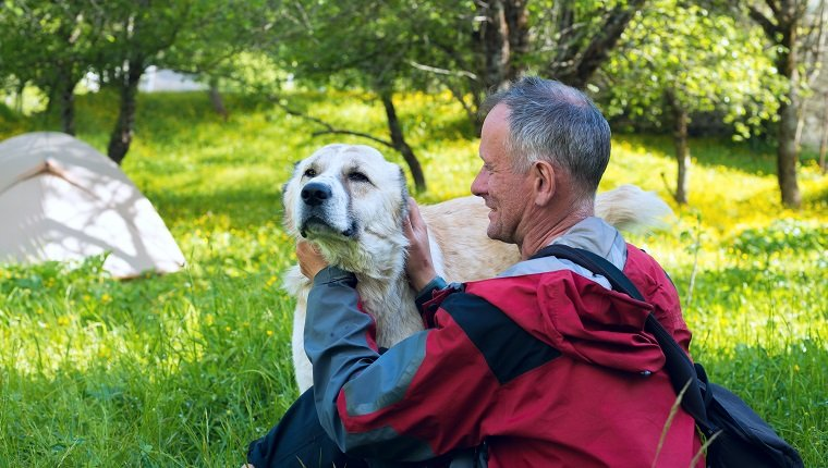 Happy traveler plays with large shepherd dog next to the tent on a meadow amid lush grass, field flowers and green trees on a wonderful sunny day. Travel in a spring mountains.
