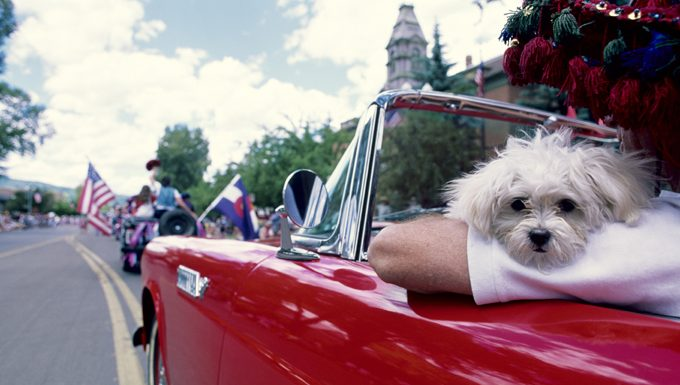 dog in 4th of july parade