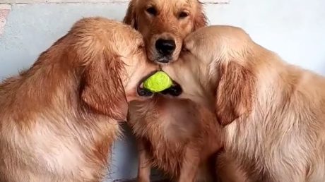 Random Dog Gifs Are The Best Thing On The Internet Today