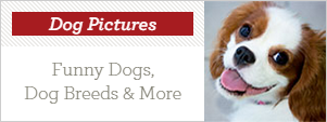 '(Picture Credit: Haydn West - PA Images/PA Images via Getty Images)' from the web at 'http://cdn1-www.dogtime.com/assets/uploads/2015/08/dogpictures.png'