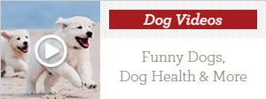 '(Picture Credit: Haydn West - PA Images/PA Images via Getty Images)' from the web at 'http://cdn1-www.dogtime.com/assets/uploads/2015/08/dogvideos.png'