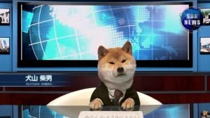 Doge Presents The Shiba In-News [VIDEO]