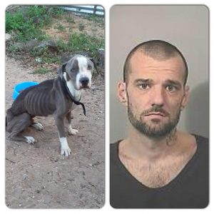 Animal Cruelty Suspect Apprehended Through Social Media
