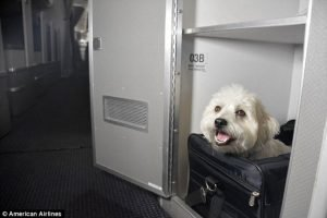 "American Airlines Offers ""Cuddle Class"" Cabins For Pets"
