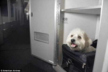 """American Airlines Offers """"Cuddle Class"""" Cabins For Pets"""
