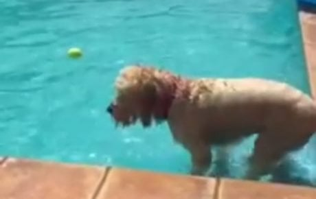 6 Dogs Who Found Funny Ways To Overcome Their Fears