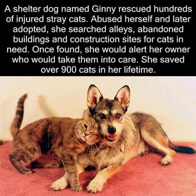 ginny-dog-who-rescues-cats