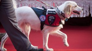 Celebrate National Service Dog Month September 2016