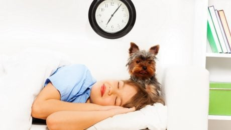 How The End Of Daylight Saving Time Affects Your Dog