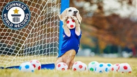 Beagle Sets World Record For Most Balls Caught With Paws