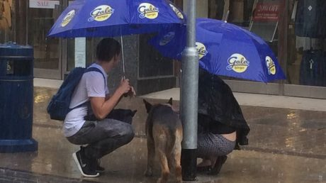 Dog Tied To Post During A Rain Shower Gets Unexpected Help