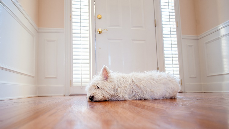 A small, white dog lies and waits next to a front door.