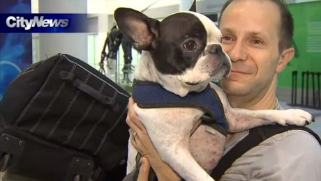 Air Canada Pilot Lands Plane To Save Dog