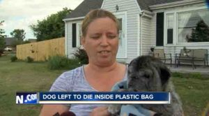 Young Girl Witnesses Pug Thrown Away Like Trash