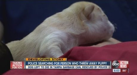 Tampa Police Looking For Person Who Threw New Born Puppy Out Like Trash
