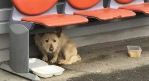 Fearful Romanian Street Dog Gets New Life In Canada