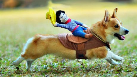 Top 10 Trending Dog Halloween Costumes For 2015