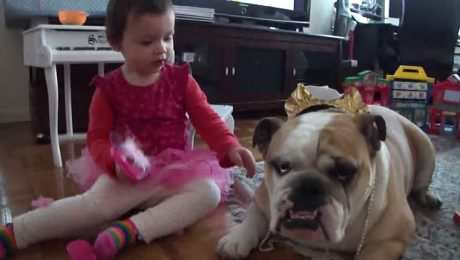 5 Reasons Bulldogs Are Awesome