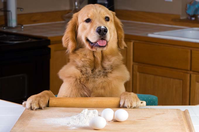 Image result for COOK FOR Your pet