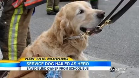 Dog Who Jumped In Front Of Bus To Save Owner Comes Home